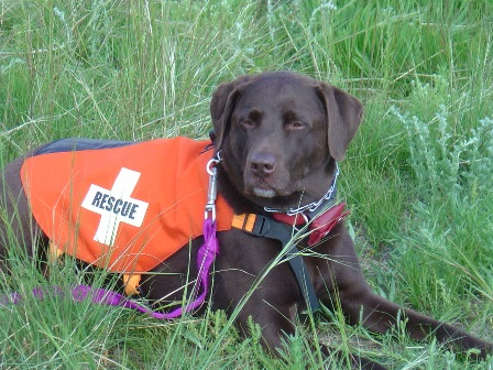 Rescue Puppies on Lcsar   Search And Rescue Dogs